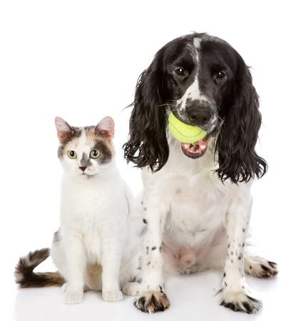 gato jugando: perro y gato mirando a la cámara aislada en el fondo blanco