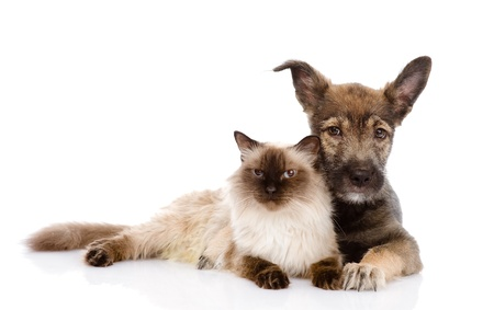 puppy and cat together  isolated on white background