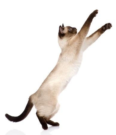 白い背景に分離された遊び心のある面白い子猫