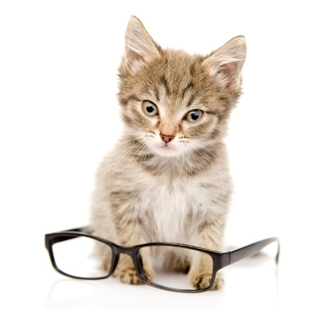 suckle: cat with glasses  looking at camera  isolated on white background