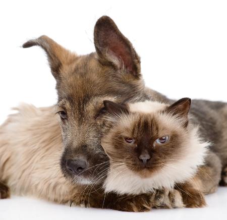 amor adolescente: perro abraza un gato aislado en fondo blanco