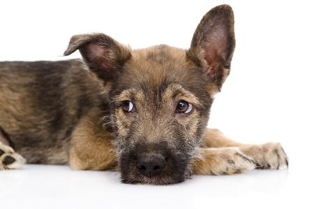 animal sad face: sad mixed breed dog  isolated on white background Stock Photo