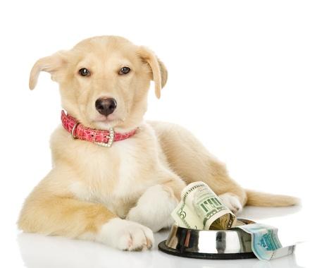 Begging dog  isolated on white background