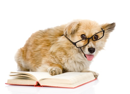 paw smart: dog in glasses read book  looking at camera  isolated on white background