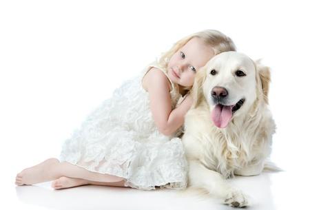 Niña abraza un perro perdiguero de oro que mira a la cámara aislada en el fondo blanco Foto de archivo - 20959921