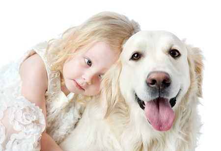 animal related: close up Golden Retriever and girl  looking at camera  isolated on white background