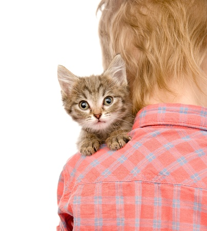 occiput: kitten peeping over the shoulder of a child  isolated on white background