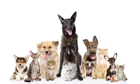 perros jugando: Grupo de perros y gatos en el frente, mirando a la c�mara aislada en el fondo blanco