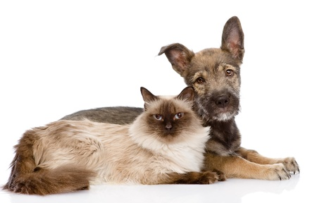 cat and puppy lying in profile   isolated on white background photo