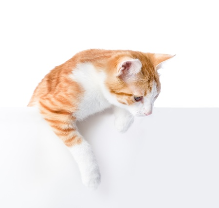 Cute kitten with empty board  isolated on white background photo