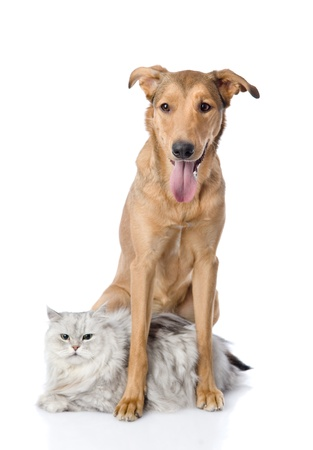 dog protects a cat  looking at camera  isolated on white background photo