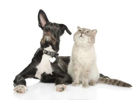 gato jugando: gato y perro mirando hacia arriba aislados en fondo blanco