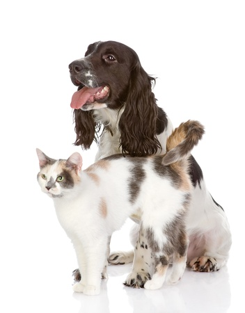 dog and cat  looking away  isolated on white background photo