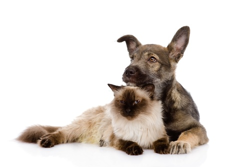 mixed breed puppy and cat together  isolated on white background Stock Photo - 21167003