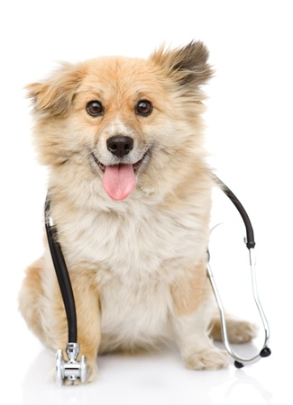 dog with a stethoscope on his neck  isolated on white background