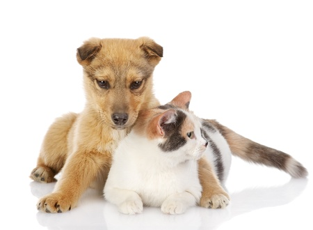dog and cat have a rest together  isolated on white background Stock Photo - 21167168