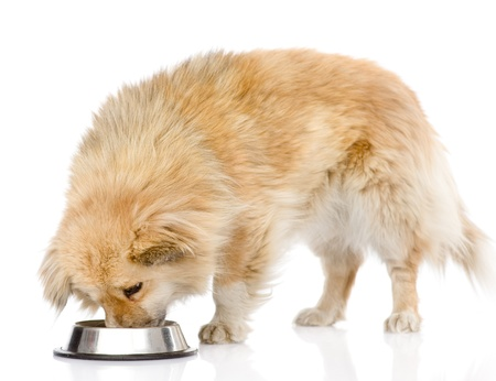 dog eating food from dish  isolated on white background Stock Photo - 21167244