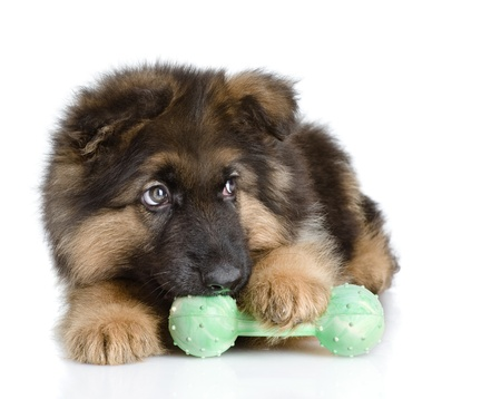 dog toy: puppy bites a toy  looking away  isolated on white background Stock Photo