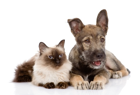 cat and puppy together  looking away  isolated on white background photo