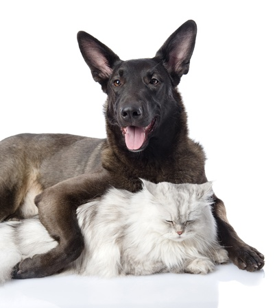 dog embraces a cat  looking at camera  isolated on white background photo