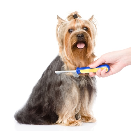 groomer: care for dog hair  isolated on white background