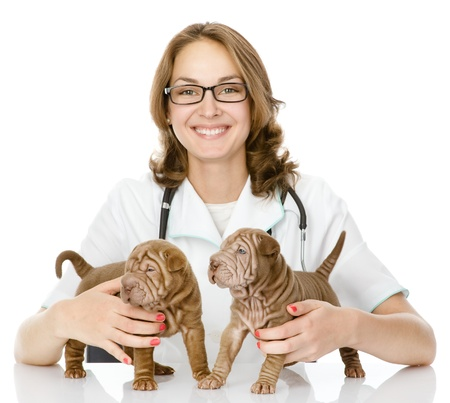 the veterinarian embraces two sharpei puppies dog  focus on a puppies  woman looking at camera  isolated on white background photo
