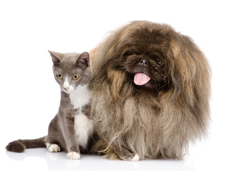 Cat and Dog posing  isolated on white background Stock Photo - 21657492