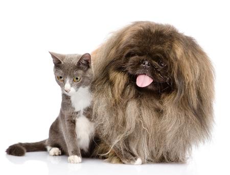 Cat and Dog posing  isolated on white background Stock Photo - 21657492