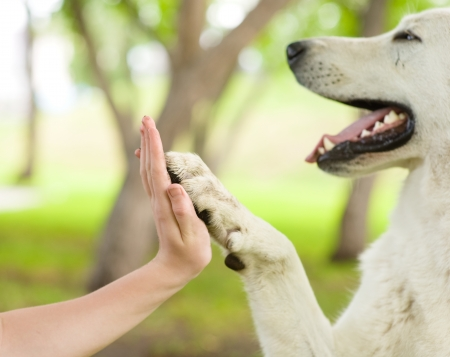 paws: Give me five - Dog pressing his paw against a woman hand Stock Photo