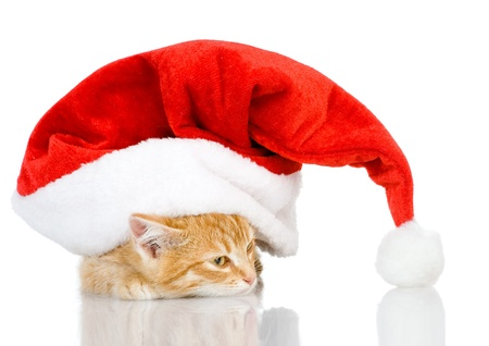 cute little kitten in red christmas Santa hat, isolated on white background photo