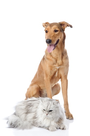 mixed breed dog and persian cat  looking away  isolated on white background photo