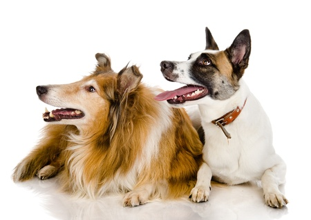 two dogs look to the left   isolated on white background photo
