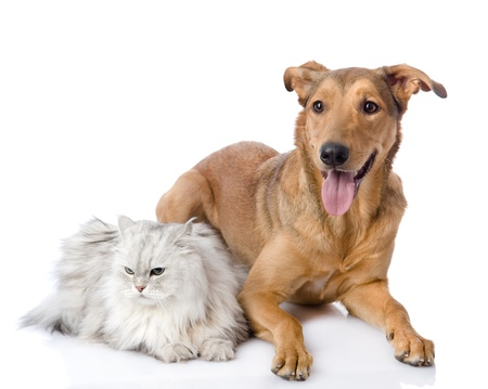 cat and dog together  isolated on white background photo