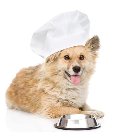 perros graciosos: Perro en sombrero del cocinero s pidiendo comida mirando a c�mara aislada sobre fondo blanco Foto de archivo