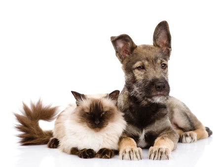cat and puppy together  looking away  isolated on white background Stock Photo - 21759074