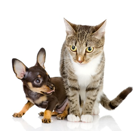 the puppy dog and cat  isolated on white background photo