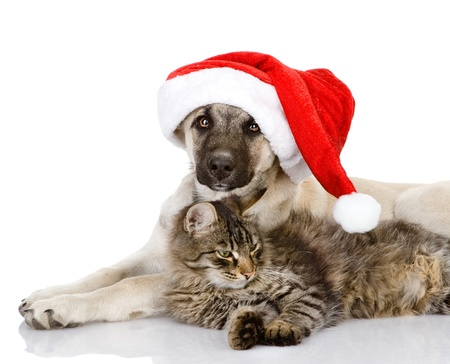 christmas fun: Cat and Dog with Santa Claus hat  isolated on white background