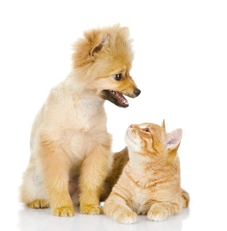 the dog and cat look at each other  isolated on white background photo