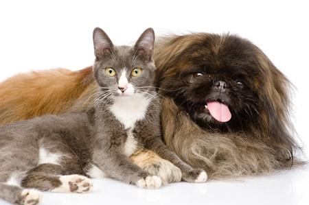 Pekingese and cat together  isolated on white background photo