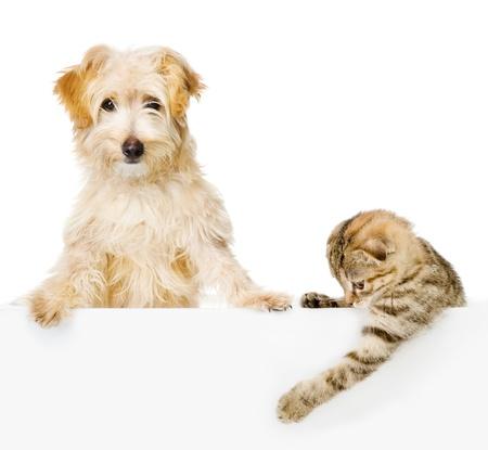 흰색 배너 위의 고양이와 개는 흰색 배경에 고립 된 카메라를 찾고