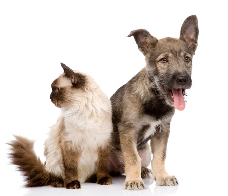 cat and dog together  focused on the cat  isolated on white photo