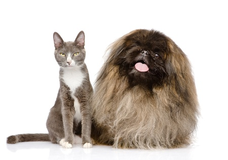 Cat and Dog posing  isolated on white background photo