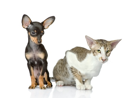 dog together with a cat  isolated on white background photo