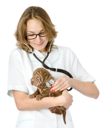 Female veterinarian examining a sharpei puppy dog  isolated on white background photo
