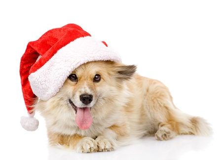 dog in red christmas Santa hat, isolated on white background photo