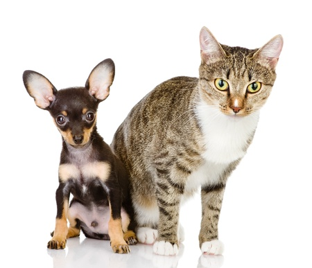 the dog and cat watchfully look in the camera  isolated on white background photo