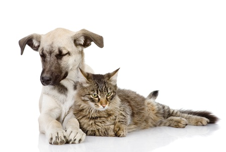 lie down: the cat and dog lie together  Isolated on a white background Stock Photo