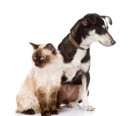 cat and puppy sitting in front  looking away  isolated on white background Stock Photo - 21992875
