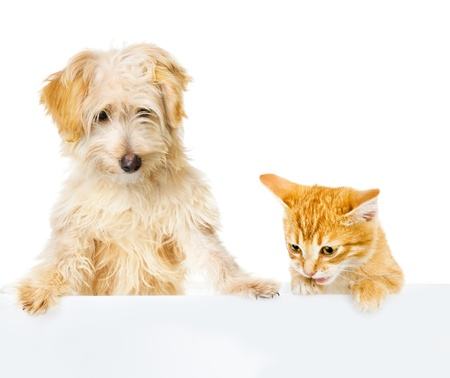 Cat and Dog above white banner  looking down  isolated on white background