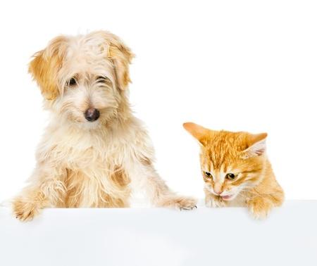 grappige honden: Kat en hond boven witte banner neer te kijken op een witte achtergrond
